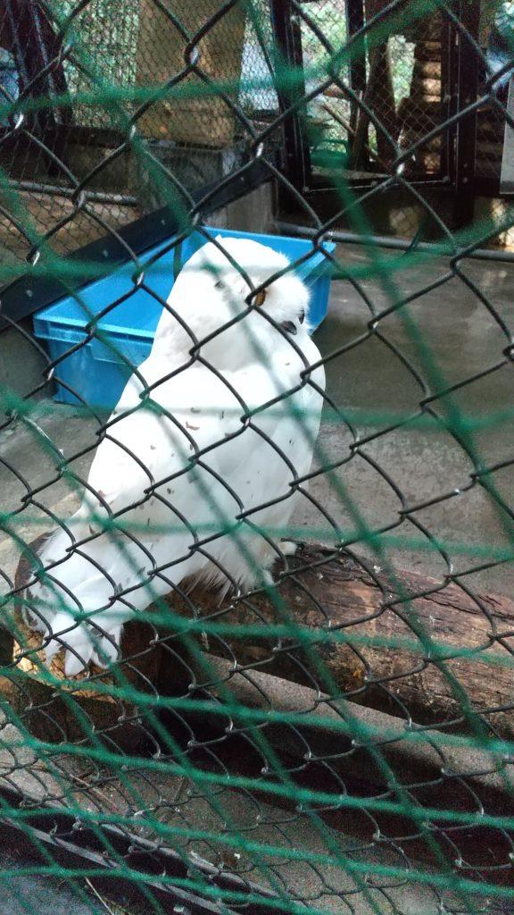 池田動物園の鳥 フラミンゴ・オウム・フクロウ・クジャク・ペンギン・・・意外と豊富です