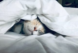 睡眠不足 睡眠時間が足りない人は試してほしい【消灯】のテクニック